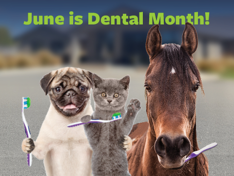 June is Dental Month