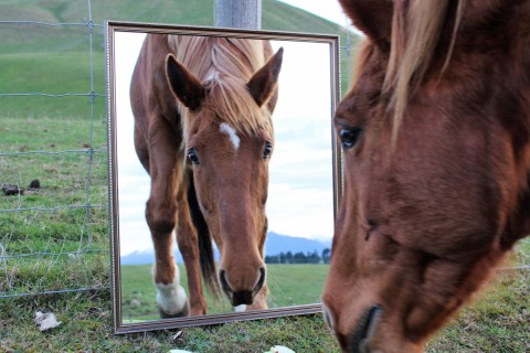 Horse looking at itself in the mirror.