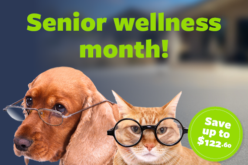 March is Senior Wellness Month