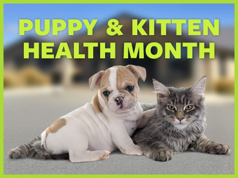 Puppy & Kitten Health Month